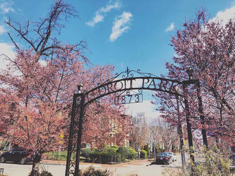 @ashleythart - Springtime at LeDroit Park in Washington, DC - Things to do in Bloomingdale