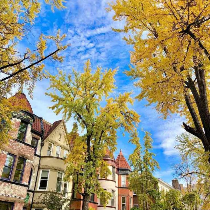 @jt_womack - Fall foliage in Dupont Circle neighborhood - Popular neighborhood in Washington, DC