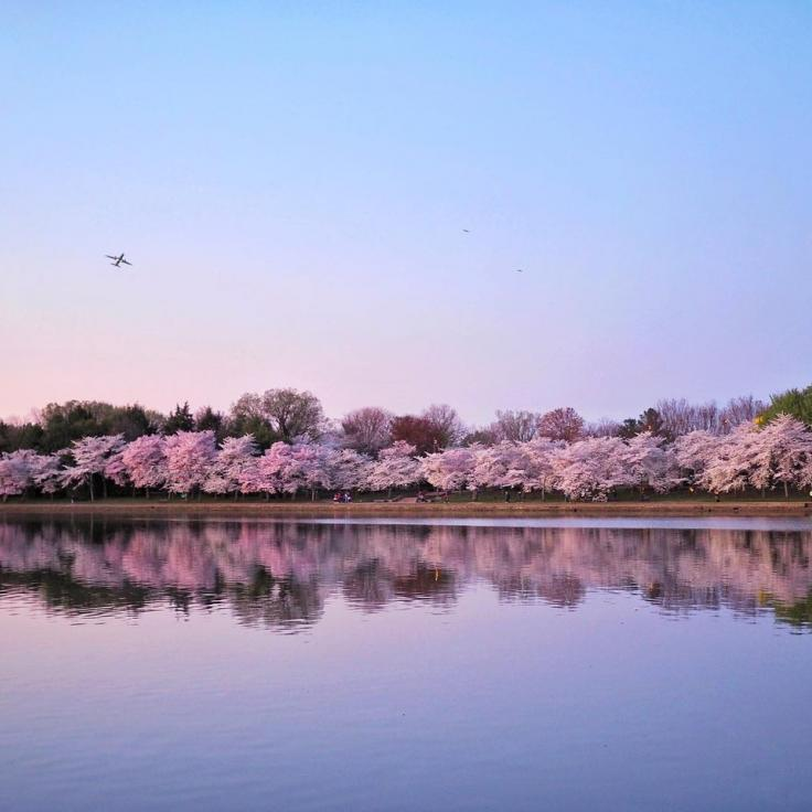 @allie.at.large - Tidal Basin with Cherry Blossoms