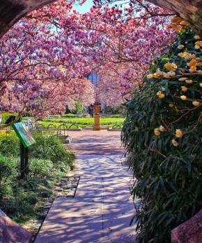@triphacksdc - Smithsonian Enid Haupt Garden - Gardens in Washington, DC