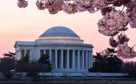 Cherry blossoms at Jefferson Memorial