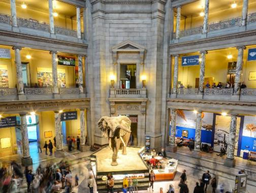 @ray.payys - Smithsonian National Museum of Natural History on the National Mall - Free Museum in Washington, DC