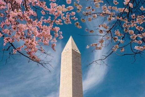 @byhopemarie - Cherry blossoms framing the Washington Monument on the National Mall during the National Cherry Blossom Festival in Washington, DC